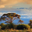 Mount Kilimanjaro. Savanna in Amboseli, Kenya - Stock Photo