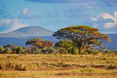 在非洲、 安博塞利、 肯尼亚的热带稀树草原景观 — 图库照片