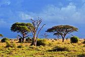 Paesaggio della savana in africa, amboseli, kenya — Foto Stock