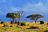 Savanna landscape in Africa, Amboseli, Kenya — Stock Photo
