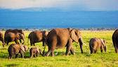 Elephants family on savanna. Safari in Amboseli, Kenya, Africa — Foto Stock