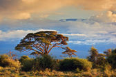 Monte kilimanjaro. savana di amboseli, kenya — Foto Stock