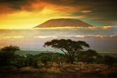 Mount Kilimanjaro. Savanna in Amboseli, Kenya — Stock Photo