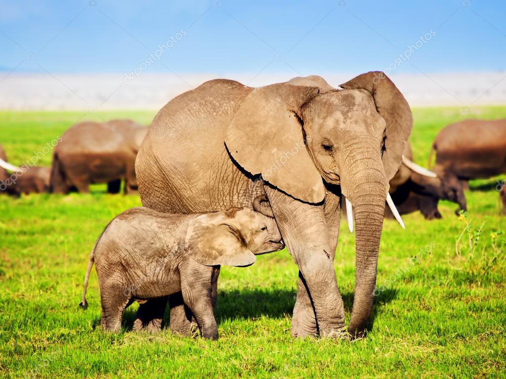 肯尼亚,非洲野生动物园