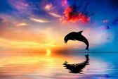 Vackra havet och solnedgången, delfin hoppning — Stockfoto