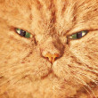 Cat face close up portrait. Painted effect — Stock Photo