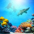 Underwater scene. Coral reef, fish groups, sharks in clear ocean water — Stock Photo #25104177