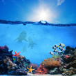 Underwater scene. Coral reef, fish groups, sharks in clear ocean water — Stock Photo #25104185