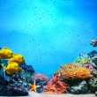Underwater scene. Coral reef, fish groups in clear ocean water — 图库照片