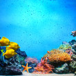Underwater scene. Coral reef, fish groups in clear ocean water — Stok fotoğraf