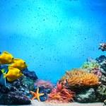 sualtı sahne. mercan, Balık grupları açık okyanus su — Stok fotoğraf