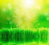 Fondo de naturaleza verde con hierba fresca y agua — Foto de Stock