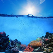 Underwater scene. Coral reef, blue sunny sky and clean water — Stok fotoğraf
