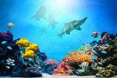 Escena bajo el agua. arrecife de coral, grupos de peces, tiburones en agua clara — Foto de Stock