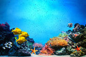 Underwater scene. Coral reef, fish groups in clear ocean water — Foto Stock