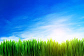 Perfect grass field nature background — Stock Photo