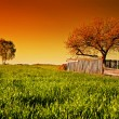 Countryside orchard landscape at sunset. Spring time — Stock Photo