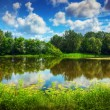 Lake in a summer forest — Stock Photo