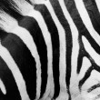 Zebra pattern close-up. Black and white stripes — Stock Photo