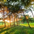 Late summer, autumn sunset in a park — Stock Photo