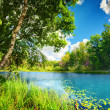 Clean lake in green spring summer forest — Stock Photo