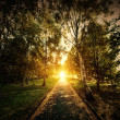Autumn, fall park. Wooden path towards the sun — Stock Photo