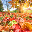 Autumn, fall landscape in park — Stock Photo