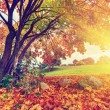 Autumn, fall park, colorful leaves — Stock Photo