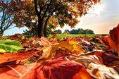 Autumn, fall landscape in park — Stock Photo