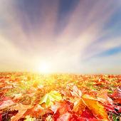 Autumn, fall landscape. Colorful leaves, sunset sky — Stock Photo