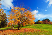Autumn, fall landscape. Tree with colorful leaves — Stock Photo