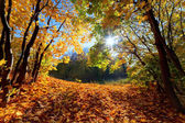 Autumn, fall landscape in forest — Stock Photo