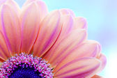 Flower close-up, sunlight from behind — Stock Photo