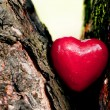 Stock Photo: Red heart in a tree trunk. Romantic symbol of love