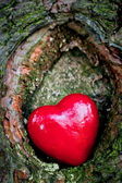 Red heart in a tree hollow. Romantic symbol of love — Stockfoto