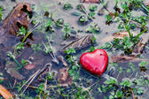 Red heart in water puddle on marshy grass, moss. Love, Valentine's Day. — Zdjęcie stockowe
