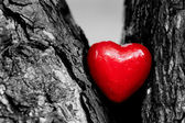 Red heart in a tree trunk. Romantic symbol of love — Stockfoto