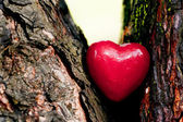 Red heart in a tree trunk. Romantic symbol of love — Stok fotoğraf