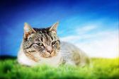 Söt katt liggande på gröna fjädrar gräs — Stockfoto