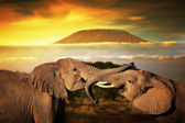 Elephants playing with their trunks on savanna. — Stock Photo