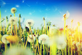 Spring field with flowers — Stock Photo