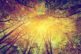 Sol brillando a través de hojas — Foto de Stock