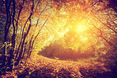 Sun shining through leaves — Foto Stock