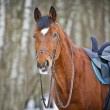 Chestnut sidesaddle horse without her rider - Stock Photo