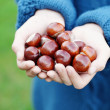 Royalty-Free Stock Photo: Little hands with chestnuts