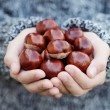 Little hands with chestnuts - Stok fotoğraf