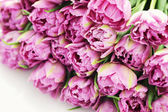 Lovely pink — Stock Photo
