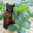 Mint essential oil — Foto de Stock