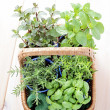 Basket of herbs - Stock Photo