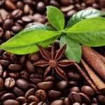 Coffee beans — Stock Photo #27509781